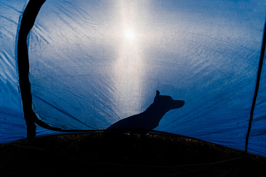 Shadow of puppy seen through blue tent during sunny day