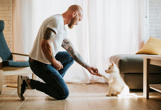 Siberian husky giving paw to his owner hand while sitting at home
