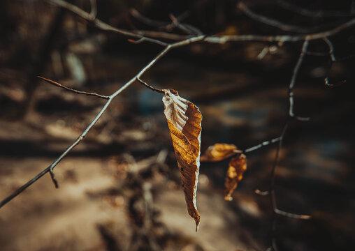 Details of the nature in winter. Marietta, Georgia.