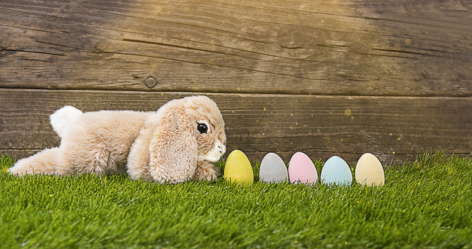 Bunny and Decorated Eggs on Fresh Grass with Wooden Background