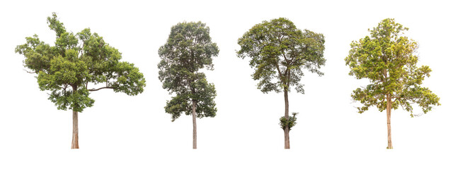 Isolated tree collection on white background