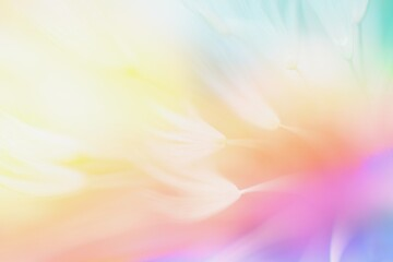 Fototapeta Soft abstract color gradient floral background , abstract dandelion