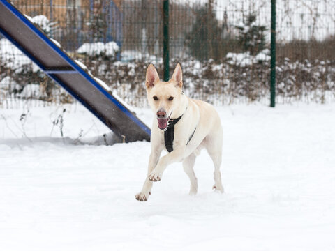 dog, street, pet, running, sitting, winter, snow, adorable, animal, moving, jumping, love, funny, happy, energy, beauty, young, outdoor, mongrel, cur, shelter,
