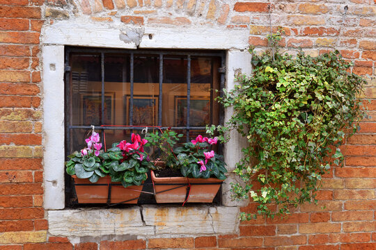 flowers and ivy on a window with a cast-iron grate, against the background of a very old brick wall