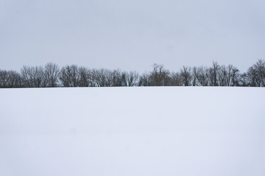 Snowy Tree Line With Copy Space