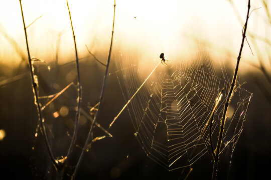 Silhouette shot of spider on its web