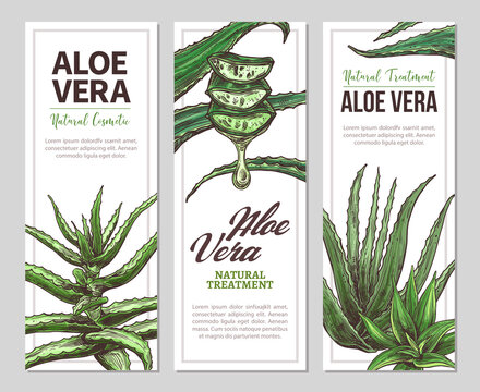 Aloe vera horizontal banners. Vector hand drawn design temlate for web. Botanical illustration
