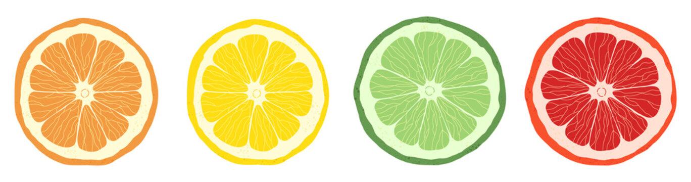 Set of citrus slices of lime, orange, grapefruit and lemon. Vector stock illustration. Textured effect on the skin.