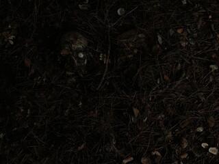 crime dans les bois