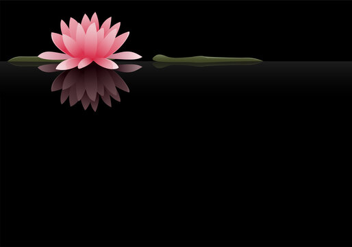 A single pink water lily with lily pads atop still water. Plenty of copyspace.