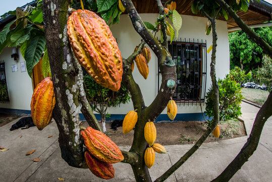 Frutos, árboles y sembríos