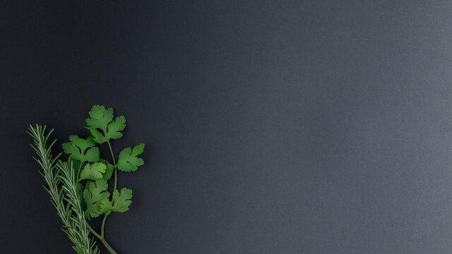 Organic coriander and rosemary on black background. Organic herbs.