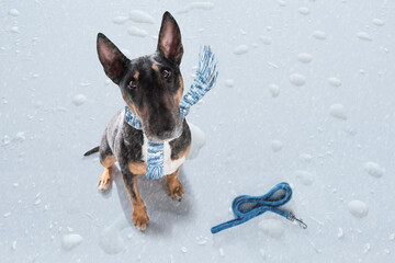 bad weather rain and snow dog