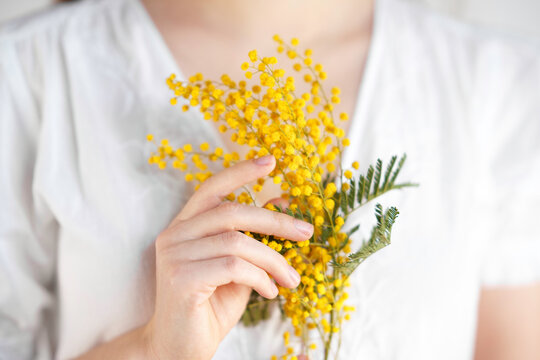 Close-up hand of young girl or woman in white dress holds yellow brunch of mimosa flowers. 8 march women's day concept.
