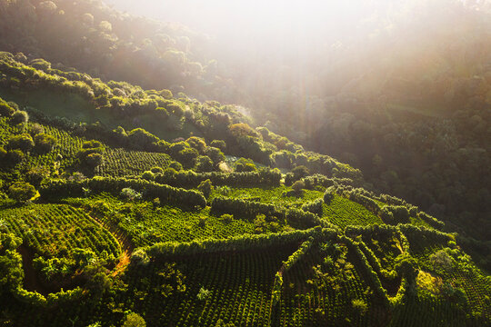 Coffee fields in Costa Rica aerial drone photograph