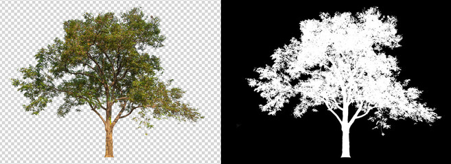Fototapeta tree on transparent background image with clipping path obraz