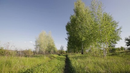 Fototapete - Rural summer landscape. Blue sky with clouds, forest, road through green meadow. Nature, landscape wilderness. Countryside outdoors, relaxation weather. Scenic views, smooth movements.