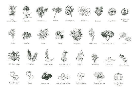 Flowers, herbs, vegetables hand drawn doodle vector illustrations set
