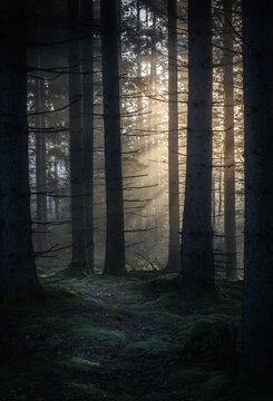 Beautiful sunrise scenery in a green forest