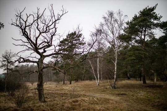 Verschiedene Bäume im Winter in Norddeutschland