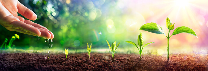 Obraz  Growing Concept - Hand Watering Young Plants With Flare effect - fototapety do salonu