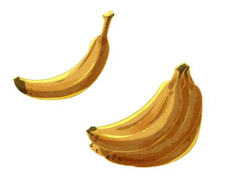 バナナ 水彩風