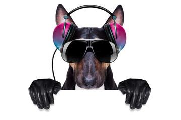dj disco dancing music dog