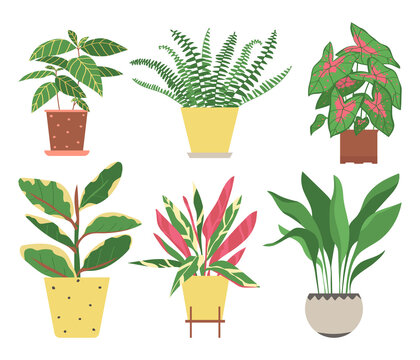 Set of home plants isolated on a white background. Collection of indoor plants in pots. Home decor. Vector illustration in flat style.