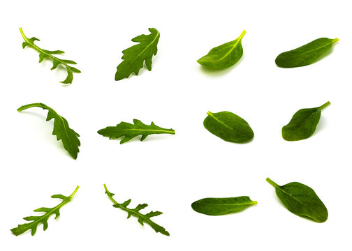 arugula and wild lettuce leaves in different angles on a white background