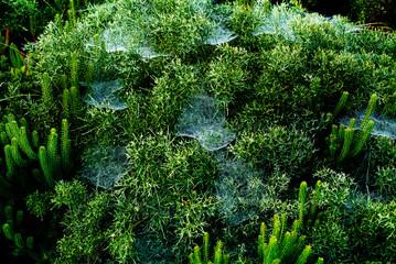 green vegetation with spider webs