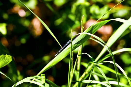 Überall Libellen