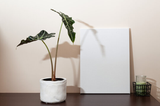 A real mocup with the blank canvas, alocasia polly and one candle on the shelf