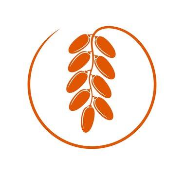 Date fruit logo. Isolated date fruit on white background