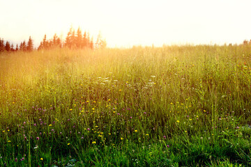 Green meadow during the summer.Meadow lit by sun.