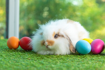 Lovely bunny easter fluffy baby rabbit with easter eggs on nature background.