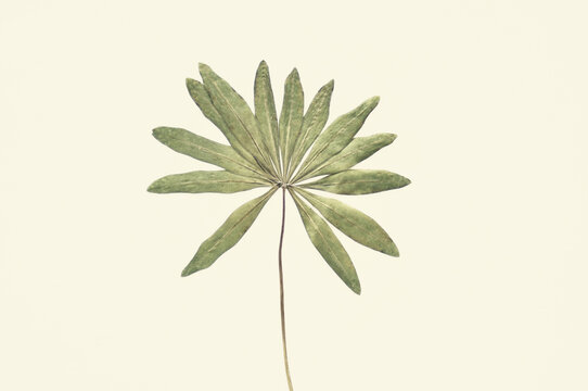 Dried green leaf on pastel yellow background