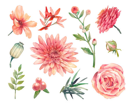 Hand painted floral elements set. Watercolor botanical illustration of chrysanthemum, ranunculus, rose flowers and fern leaves. Natural objects isolated on white background