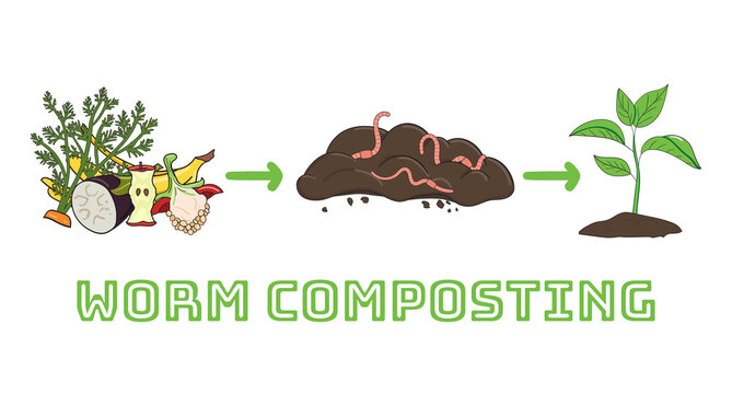 Schema of recycling organic waste from collecting kitchen scraps to use compost for gardening. Recycling organic waste. Zero waste concept