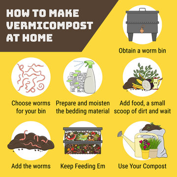 Infographic of vermicomposting. How to make vermicompost at home. Worm composting. Recycling organic waste, vermicomposter. Sustainable living, zero waste concept