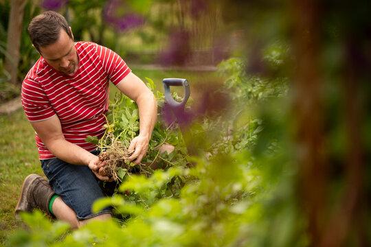 Man harvesting vegetables in garden