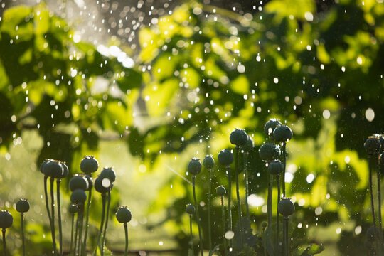 Water droplets falling over lush green plants and flowers in garden