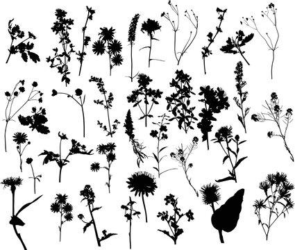 thirty five black wild flowers on white illustration