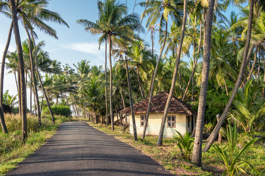 Rural landscape with village house and palm trees plantation in Kerala, India