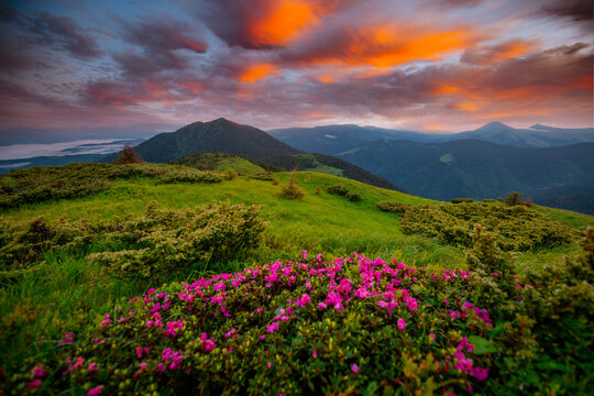 Summer scene with flowering hills illuminated by the sunset.