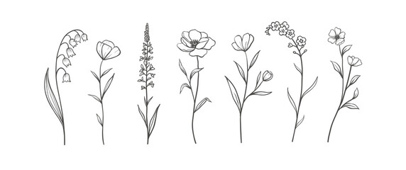 Set of Herbs and Wild Flowers. Hand drawn floral elements. Vector illustration - fototapety na wymiar