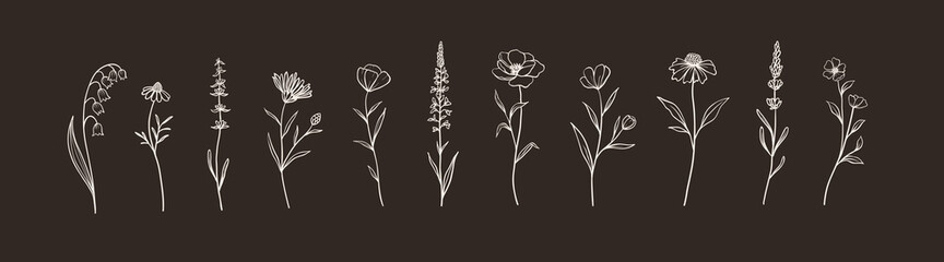 Fototapeta Set of Herbs and Wild Flowers. Hand drawn floral elements. Vector illustration