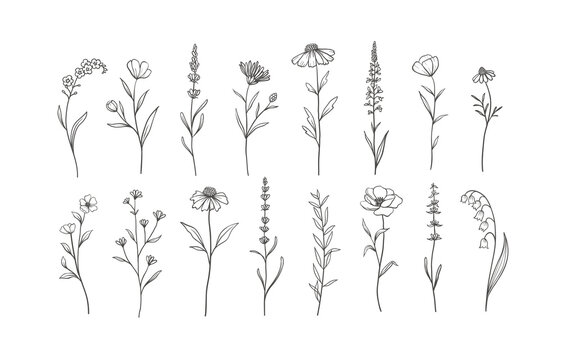 Set of Herbs and Wild Flowers. Hand drawn floral elements. Vector illustration