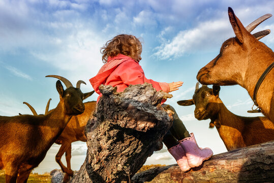 Girl sitting on a tree trunk surrounded by goats, Poland