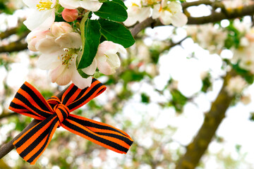 St. George ribbon a great victory symbol. A bow of st george ribbon on a branch of a flowering apple tree. Spring holiday. Wall mural