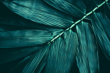 bamboo leaves texture, dark abstract background